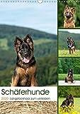Schäferhunde Langstockhaar zum verlieben (Wandkalender 2020 DIN A3 hoch): Langhaar Schäferhunde für das ganze Jahr (Monatskalender, 14 Seiten ) (CALVENDO Tiere)
