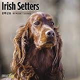 2020 Irish Setters Wall Calend...