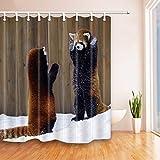 vrupi Bär Home Decor Waschbär spielt im Schnee Duschvorhang 180,3 x 180,3 cm schimmelresistent Polyester Stoff Badezimmer Fantastische Dekorationen Badvorhänge Haken enthalten