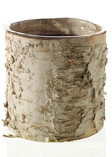 """Accent Birch Cylinder Vase Rustic Wedding Decorations - 5.5"""" Tall x 6"""" Wide"""