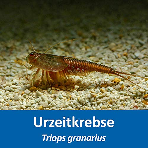 AQ4Aquaristik Triops granarius - Urzeitkrebse - ca. 100 bis 250 Triops Eier - mit Anleitung - RARITÄT