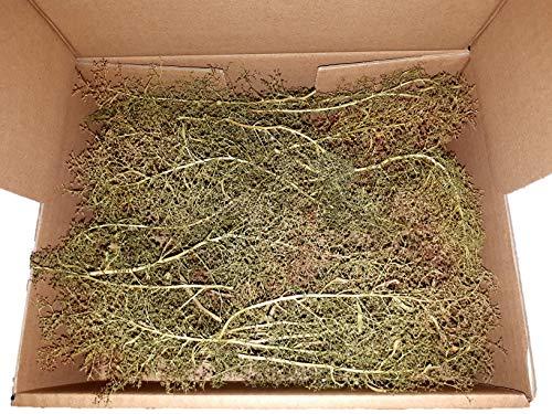Muwse Seemoos Meerschaum mind. 25 Stk ca 4-25 cm Modell-eisenbahn-zubehör Diorama Landschafts-bau Baum-rohling Bastel-set