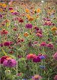 Poster 13 x 18 cm: Die bunten Wilden Blumen Frankreichs von