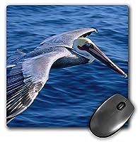 3drose LLC 8x 8x 0.25インチマウスパッド、Douglas Peebles ( MP _ 83385_ 1)