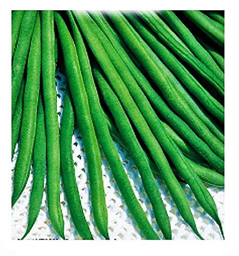 Semillas de frijol scylla - phaseolus vulgaris - semillas agrícolas - frijoles - alrededor de 200 semillas