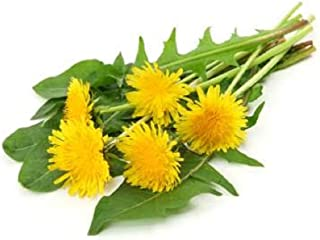 David's Garden Seeds Herb Dandelion 1334 (Green) 200 Non-GMO, Open Pollinated Seeds