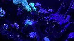 Amazon Com Luz Led Para Acuario Luz Led De Acuario 30w Iluminación De Agua Salada Con Control Táctil Y Chips Led De 3w Para Acuario De Arrecife De Coral Nano Pecera Home