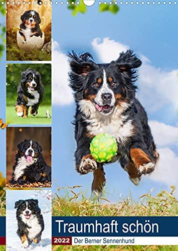 Traumhaft schön - Der Berner Sennenhund (Wandkalender 2022 DIN A3 hoch)