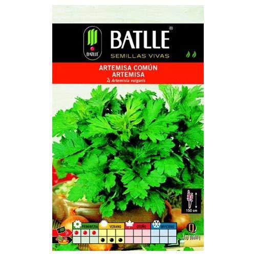 ScoutSeed Graines aromatiques de Batlle – Armoise Commune (0,75 g)