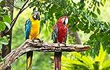 Fototapete selbstklebend   Macaw Papageien - 310x200 cm  