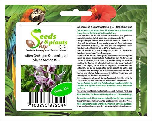 Stk - 25x Affen Orchidee Knabenkraut Albino Zimmerpflanzen Samen #35 - Seeds Plants Shop Samenbank Pfullingen Patrik Ipsa