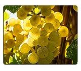 luxlady Gaming tapis de souris éclairé image ID: 22229088Close Up trousseau de soleil Riesling Raisin vin blanc suspendu sur vigne
