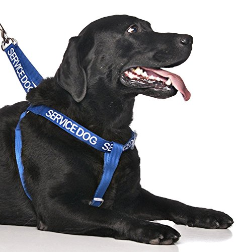 Dexil Limited Service Dog Blue Color Coded Alert Warning L XL Non Pull Dog Harness Prevents Accidents by Warning Others of Your Dog in Advance