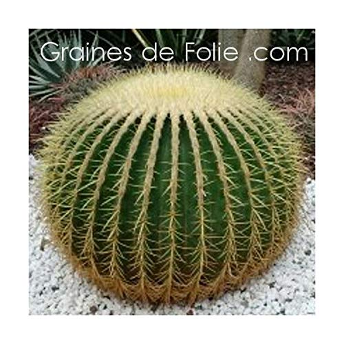 Portal Cool Kissen Schöne Mutter Kaktus Samen Samen