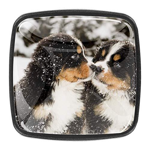 Home Office Küche Kleiderschrank Schublade zieht Griff Berner Sennenhund Puppen schnüffeln sich gegenseitig für Kommode Schubladen Glass Shepherd Türschrank Knöpfe Schrank Hardware