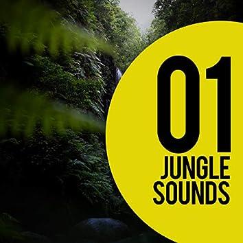 01 Jungle Sounds