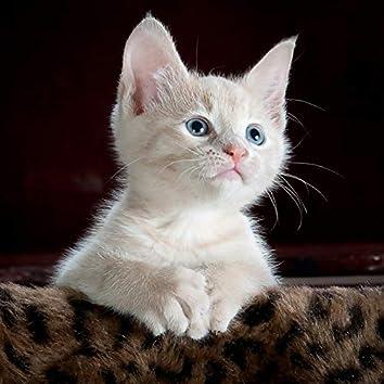 Kitten Love Night