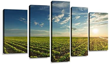 Young soybean crops at idyllic sunset Modern Art Painting set Digital Print Picture on Canvas Framed Artwork Wall Decor Living Room Office Bedroom 5 Pieces