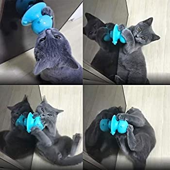 Jouet Chat,Jouets à l'herbe à chat,Jouet à Chat pour Chat Lèche avec friandise, Jouet molaire à Ventouse pour Chat
