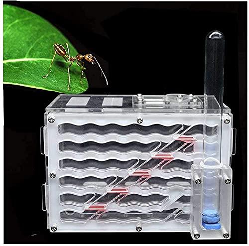 WSVULLD Mini Nido de Hormigas, Taller de Hormigas, Juguetes educativos para niños. Hormigas, jaulas de Insectos fáciles de Instalar, Regalo de cumpleaños (Color : -, Size : -)