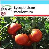 SAFLAX - Set regalo - Tomate - Rosa de Berne - 10 semillas - Con caja regalo/envío, etiqueta para envío, tarjeta de felicitación y sustrato de cultivo y fertilizante - Lycopersicon esculentum