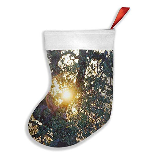 Td04O-Q 16.5' Christmas Stocking with Cuff, Unique Olive Tree Sun in Good Weather Christmas Decorations As Gift Bags