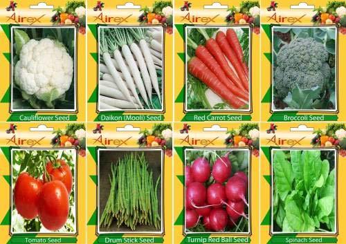 FERRY Hohe Wachstum Seeds Nicht NUR Pflanzen: Seed Blumenkohl, Daikon, Rot, Brokkoli, Tomate, Trommel-Stock, Rübe Rote Kugel und Spinat-Samen (20 pro Paket)