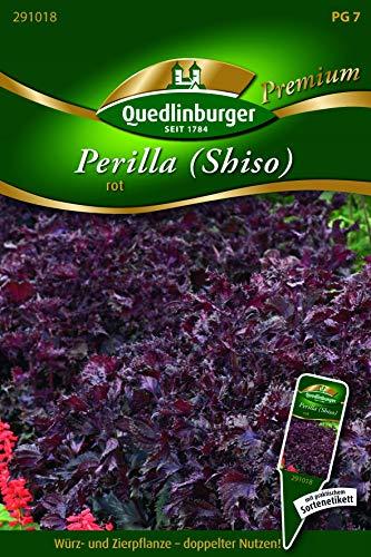 Perilla, rot Quedlinburger Saatgut Samen 291018