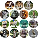 good job stickers for kids - 300 Pack Reward Stickers for Teachers. Fun Motivational & Incentive Stickers for Kids. Trendy Animal Meme Stickers for All Ages and All Classes.