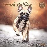 French Bulldog Deluxe 2020 Kalender