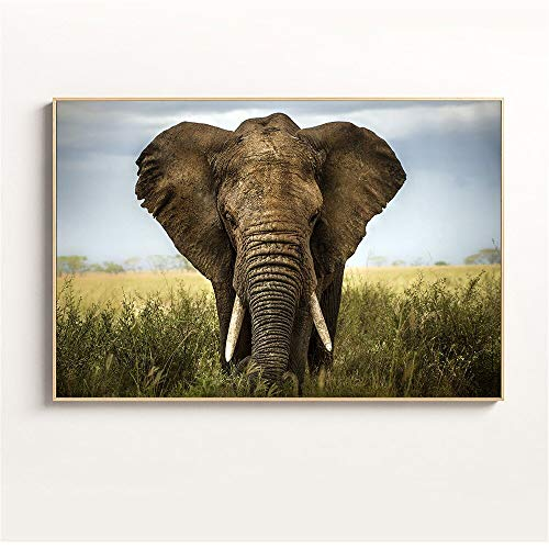 Puzzle 1000 Piezas Elefante en Pasto Verde Puzzle 1000 Piezas clementoni Juego de Habilidad para Toda la Familia, Colorido Juego de ubicación.50x75cm(20x30inch)
