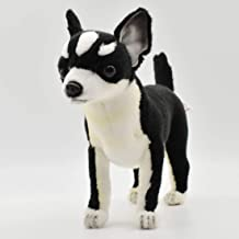 Best cute black and white chihuahua Reviews