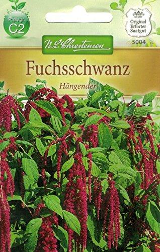 Chrestensen Fuchsschwanz 'Hängender'