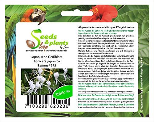 Stk - 4x Japanische Geißblatt Lonicera japonica Pflanzen - Samen #272 - Seeds Plants Shop Samenbank Pfullingen Patrik Ipsa