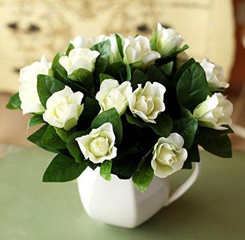 Graines Gardenia jasminoides Blanc Cape Jasmine Fragrant Fleur, emballage d'origine, 20 graines / Pack, Bonsai Indoor Danh-danh
