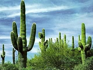 Best barrel cactus for sale Reviews