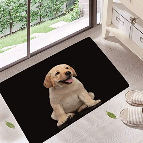 JHDF Felpudo Exterior Interior Perros Lindos /Único Hogar Decorativo Bienvenido Alfombrillas Antideslizantes Alfombras de ba/ño para Entrada Dormitorio Ba/ño