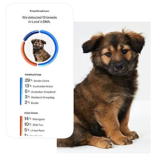 PaylesswithSS Kit ADN pour chien facile à utiliser Ancestry Breed Analyse détaillée