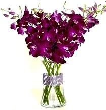 Best deep purple orchid Reviews