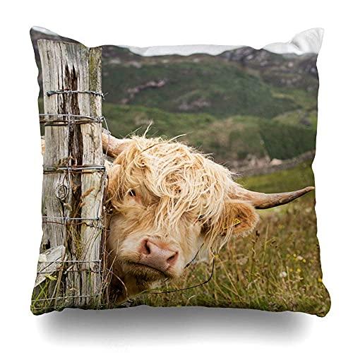 AlineAline Funda de almohada marrón Highland Scottish Highlander Escocia Wildlife Vaca Big Red Africa Agricultura ganado lindo con cremallera 45,7 x 45,7 cm