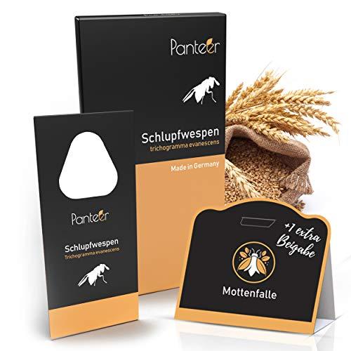 Panteer  Schlupfwespen gegen Lebensmittelmotten + GRATIS Mottenfalle - 2-6 Karten à 3 Lieferungen gegen Motteneier - 1 Mottenfalle gegen männliche Motten (6Karten à 3 Lieferungen)