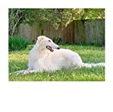 Set de pintura para adultos 5D DIY Pintura de diamante digital Perro animal lindo perro mascota Farmhousefarmdecoration