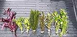 Desconocido Plantas de Acuario, gambario. Lote 8 Plantas