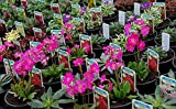 20 Mixed Alpine Plants for Part Shade in 9cm POTS - Alpine Plant Collection for Rockeries, Troughs and Garden