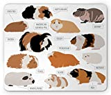 Lunarable Guinea Pig Mouse Pad, Infographic Design Classification for Types of Rodent Breeds, Rectangle Non-Slip Rubber Mousepad, Standard Size, Brown Ginger