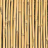 KULTIVERI Varillas de Bambú Naturales Ecológicas. 100 Estacas para Uso Agrícola y Huertos Domésticos. (120 CM (10-12 mm diametro))