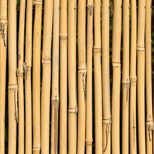 KULTIVERI Varillas de Bambú Naturales Ecológicas. 100 Estacas para Uso Agrícola y Huertos Domésticos. (90 CM (8-10 mm diámetro))