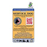 XpressID Service Dog ID Card | Includes Registration to National Dog Registry