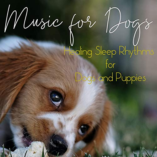 Music for Dogs: Healing Sleep Rhythms for Dogs and Puppies