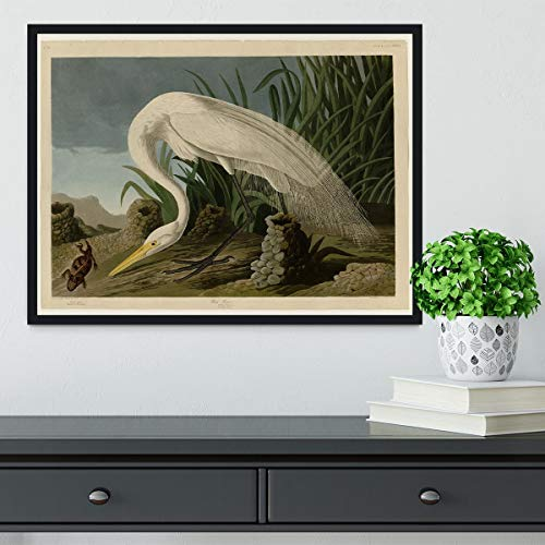 Audubon White Heron - Lámina enmarcada, Madera, 24in x 16in | Black Frame No Border